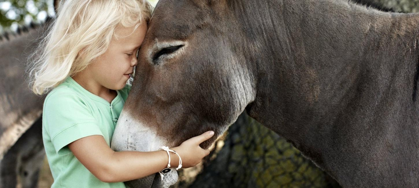 Girl together with donkey