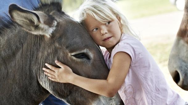 Girl with donkey in Knuthenborg