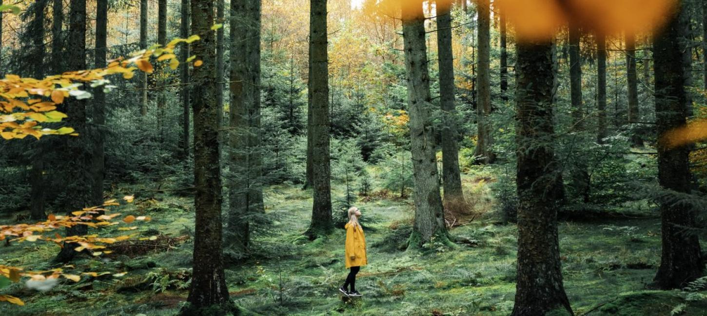 Girl in Rold Forest in autumn